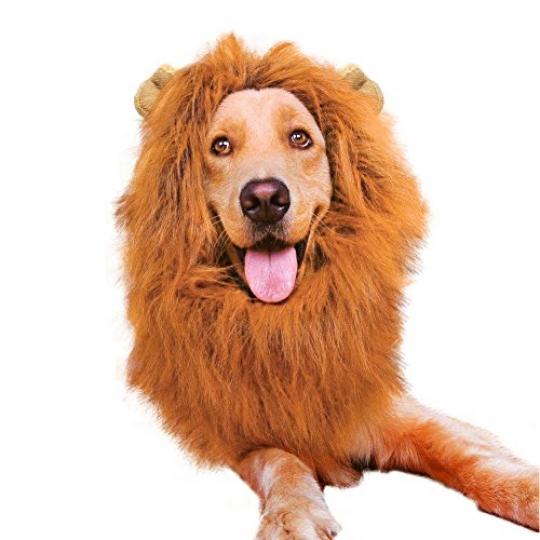 Peluca de León para perro ajustable - Mascotas disfraz - Disfraceslandia 72d261760462